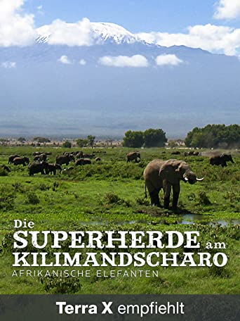 Die Superherde am Kilimandscharo - Afrikanische Elefanten