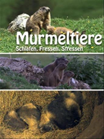 Murmeltiere - Schlafen, Fressen, Stressen