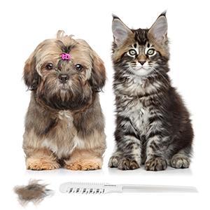 pet hair cutting