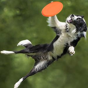 Dog Frisbee Soft Silicone