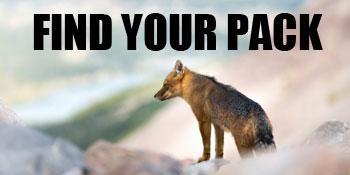 Find Your Pack banner