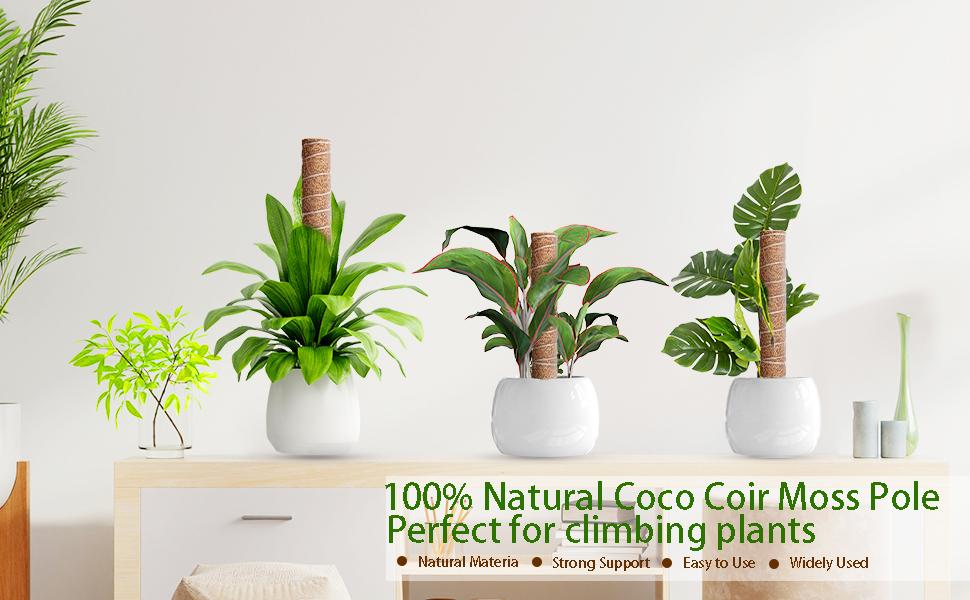 100% natural coco cori moss pole perfect for climbing plants