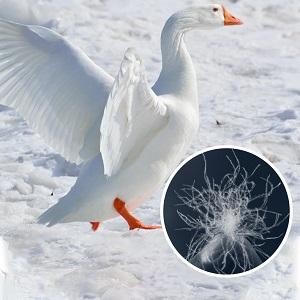 goose duck down feather comforter