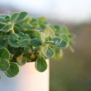 For Indoor plants