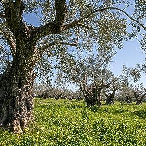 Olive Fields Scenic Art