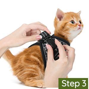 cat harness
