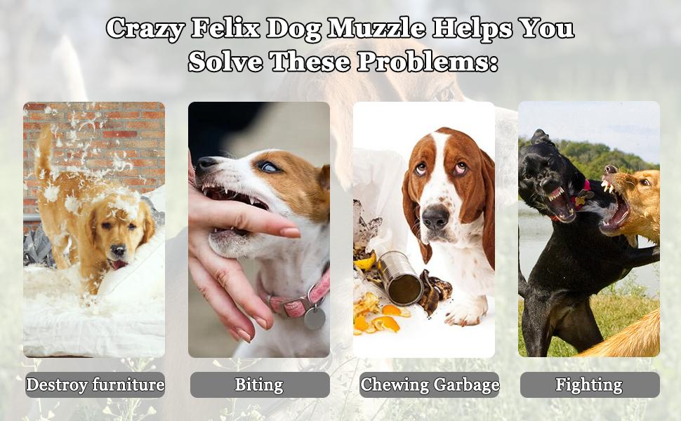 Crazy Felix Dog Muzzle