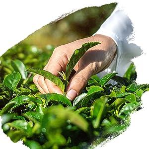 Himalayan Organics