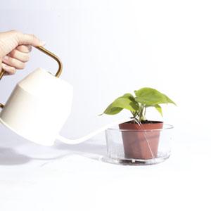 bottom watering lemon lime pothos in bowl of water