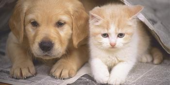 cat dog pet long hair shor thair tangles, dander, trapped dirt