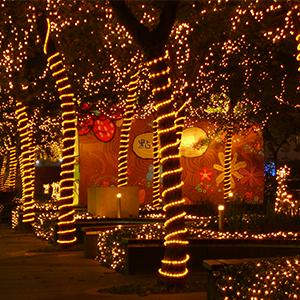 rope fairy lights