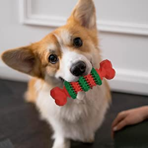 A dog is holding the bone toy