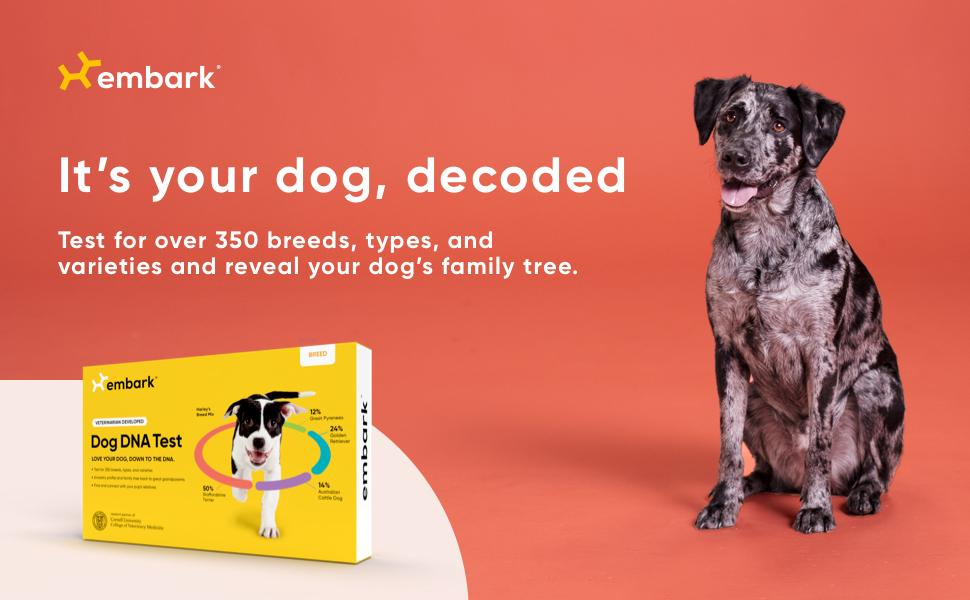 A photo of a dog next to an Embark Breed ID Kit that tests for over 350 breeds