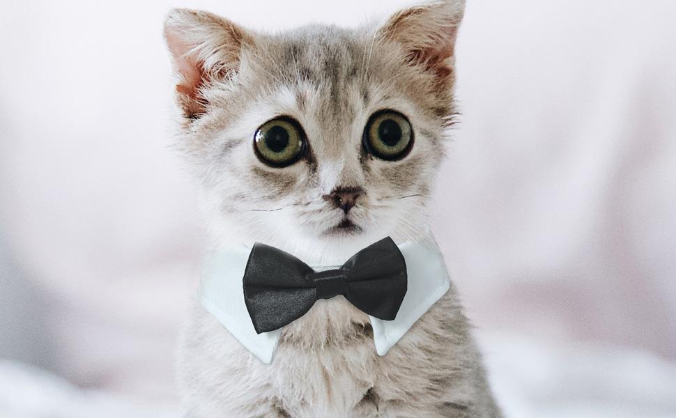 Cat with Koolmox Pet Bow ties