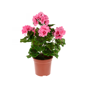 pots to plant flowers