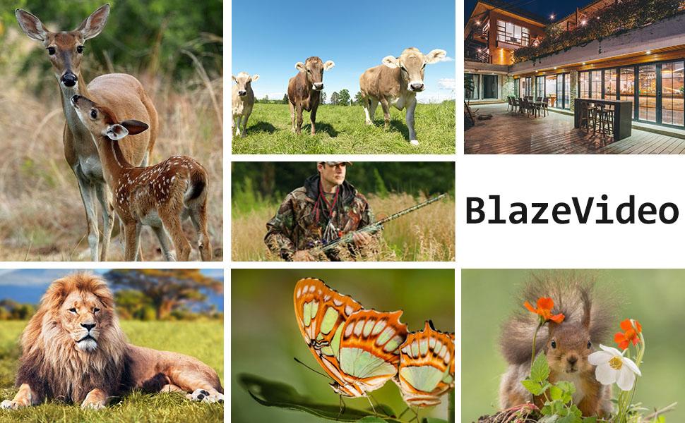 wildlife hunting camera