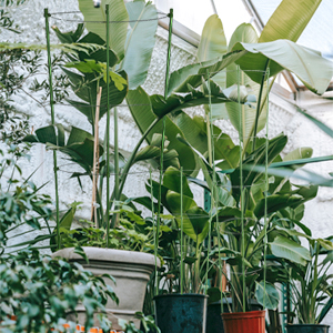 several potted plants with plant support stakes