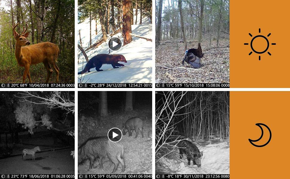 trail camera11