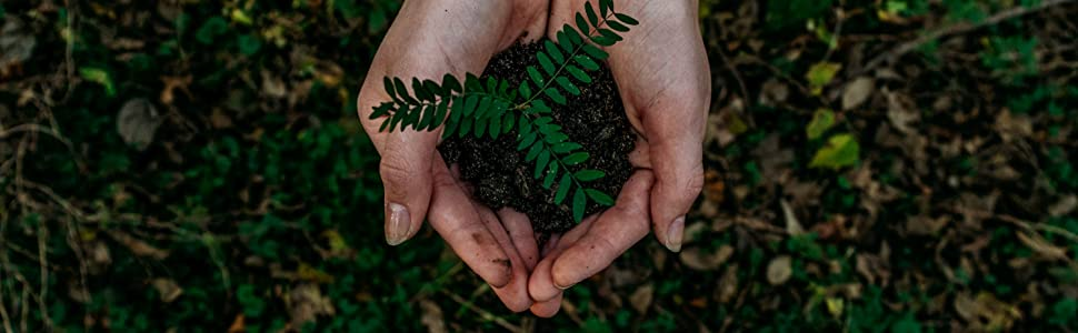 Hands together holding dirt and a plant