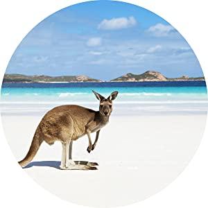 Kangaroo on Australian Beach