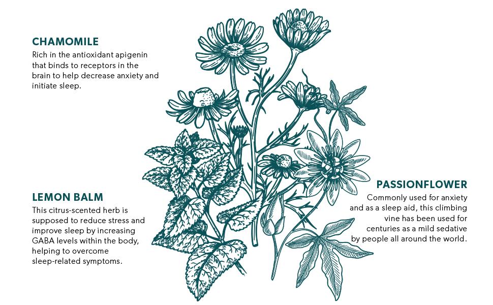 Nutra Relax - Key Ingredients