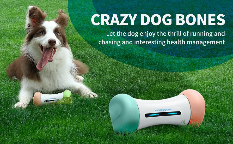 smart dog toy