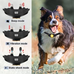 shock collar with remote