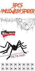 spider set 1