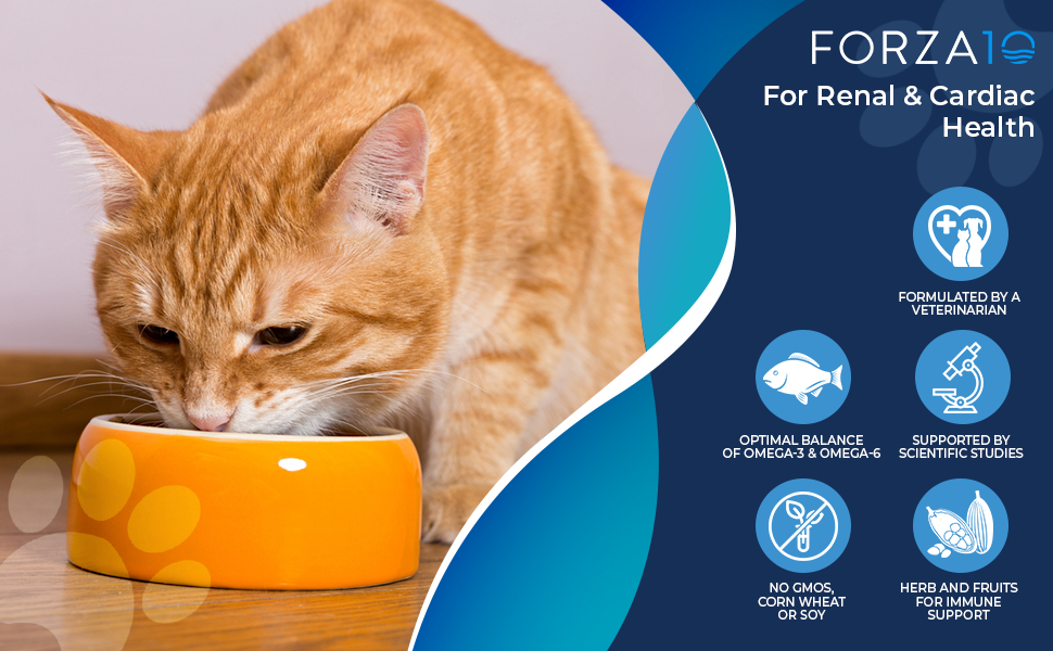 Orange cat eating from bowl on the left and Forza10 product information on the right