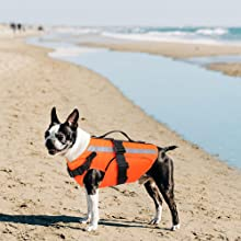 1-For small dogs when go to seaside
