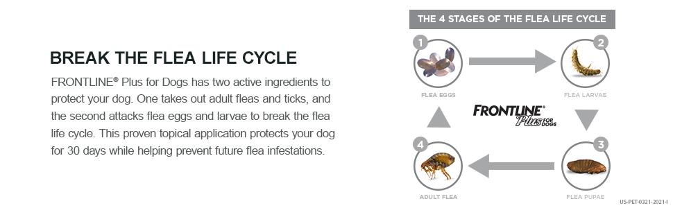 Flea and Tick Lifecycle