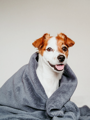 waterproof dog blanket for couch bed sofa car waterproof pet blanket for sofas dog throw blankets
