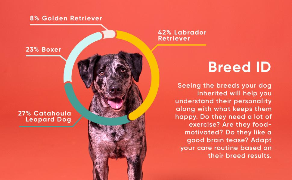 An image of a dog with it's breed breakdown halo. The Breed ID Kit shows the breed your dog has.