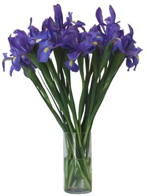 Stargazer Barn Iris