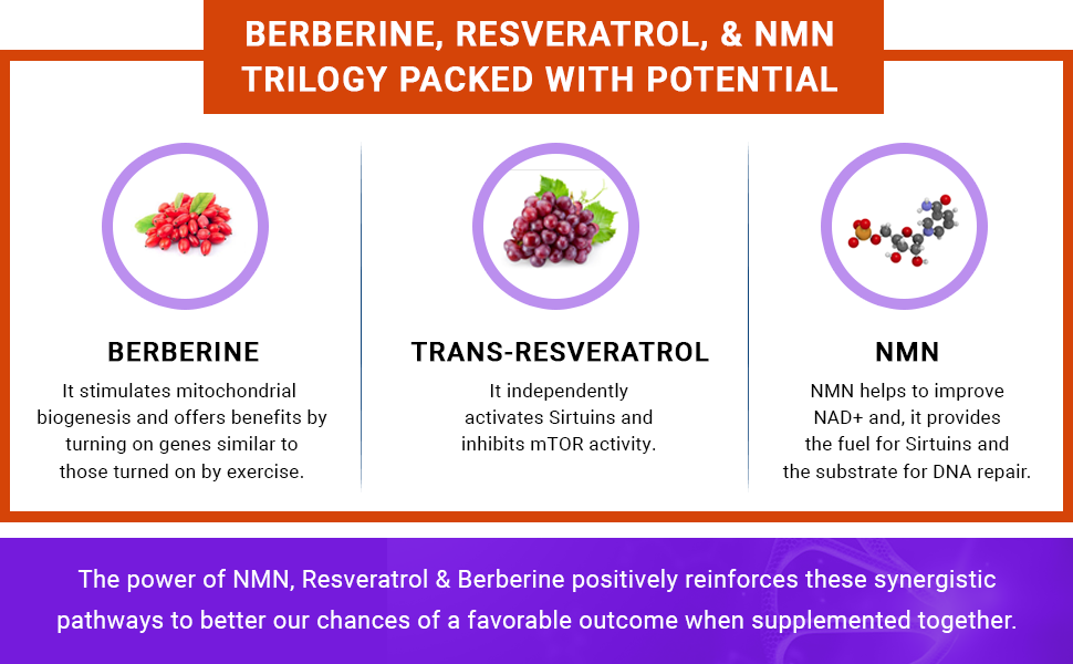 Berberine, Resveratrol,  &  NMN- Trilogy Packed with Potential