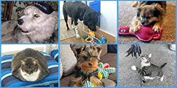 The pets of the Pet Fit For Life family