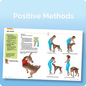 Photo of positive dog training methods