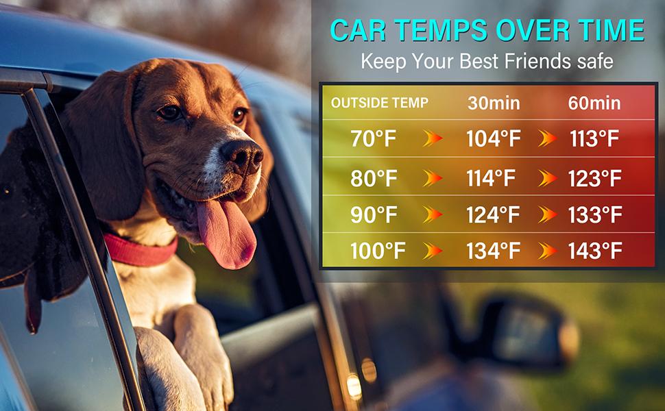 keep your pets safe