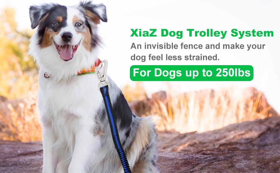 dog trolley system
