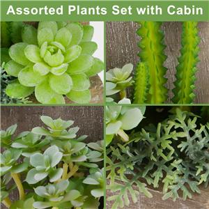 Assorted Plants Set
