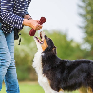 Interactive Play & Training with Your Dog