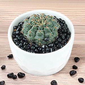 plant decorative stone