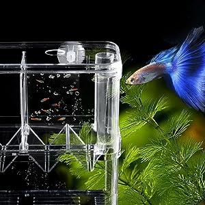 fish incubator box