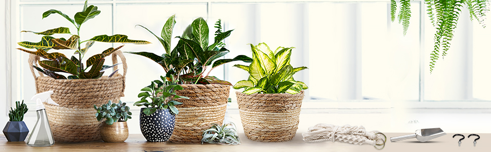 boho hanging planters seagrass baskets pots