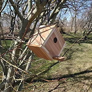 Wakefield Cedar Birdhouse hanging from a tree in the park