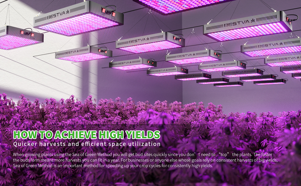 BESTVA Growing Room