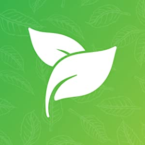 Nozomi - Leaves
