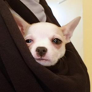 dog sling tomkas