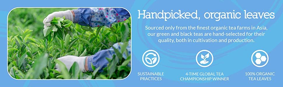Tea leaves are sourced from organic farms in Asia, handpicked for quality