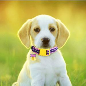 reflective dog collar for small dogs